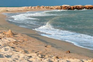 Украинские экологи предложили договориться с Россией о пятилетнем запрете вылова рыбы в Азовском море
